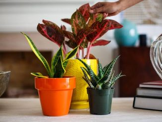 Five Indoor Plants That Will Bring Positivity and Prosperity to Your Life