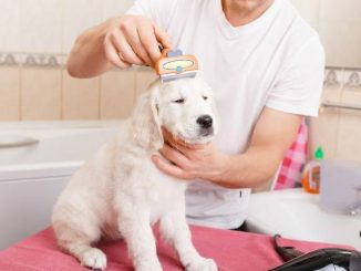 Three Brilliant Life Hacks For Dog Owners