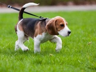 Five Best Tips For Taking Care of Your Pet Dog