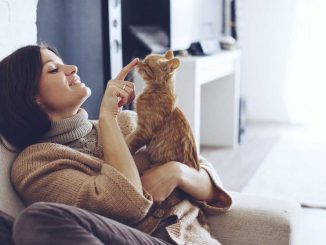 Four Common Mistakes Cat Owners Make