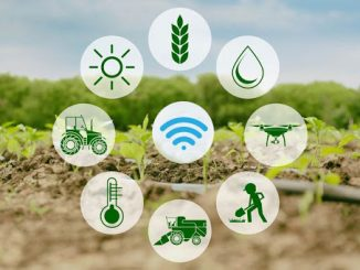 Four Things to Consider Before Developing Your Smart Farming Solution